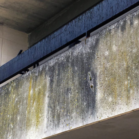 algues-facade-groupe-licef-deppolution